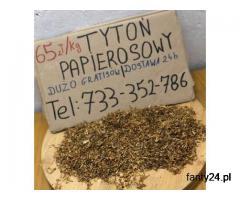 Tytoń do gilz *NAJLEPSZY* tani tyton papierosowy tel. 733 352 786